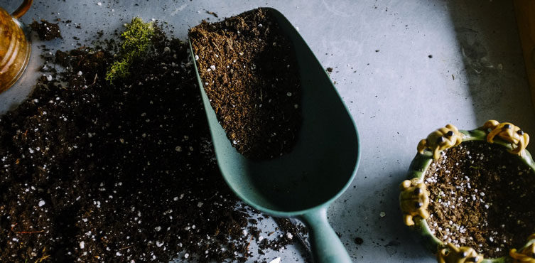 Compost - Added Vitamin for your Plants
