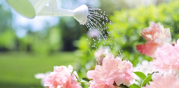 Know the Nature & Water Requirement of your Plant