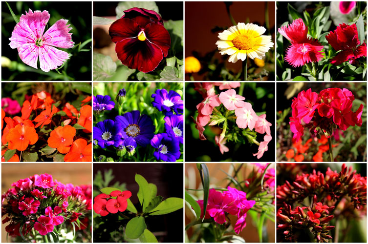 Flower Plants that You Should Get Home this Winter