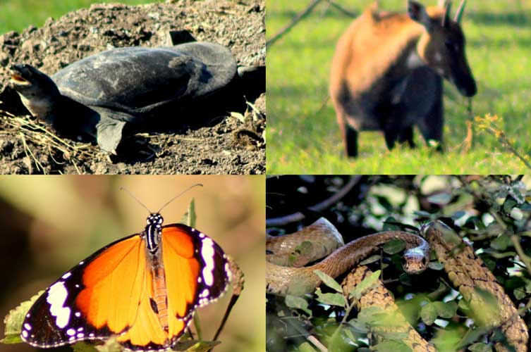 Turtle, Asian Antelope, Butterfly and Rat snake (Clockwise from top left)