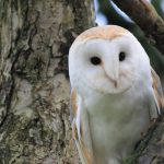 Bird Watching – Why and How You Should Do Birding