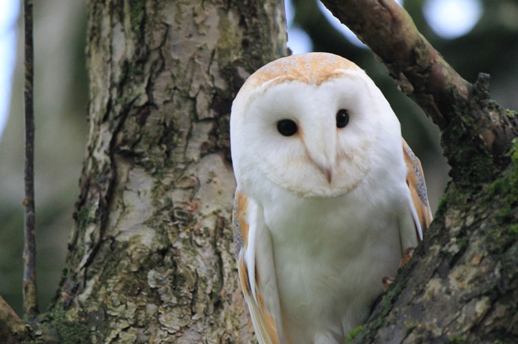 Bird Watching- Why and How You Should Do Birding